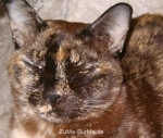 cats_046