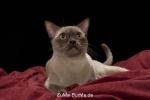 catpics24413