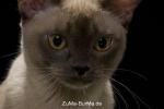 catpics24430