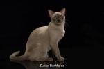 catpics24440