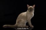 catpics24441