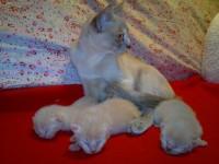 Nele und ihr F-Wurf, 3 Tage alt.