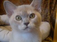 ZuMa BurMa's Elsa von Brabant, 3 Monate alt