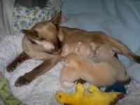 Anne-Grethe mit Neles Kittens
