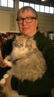 Sibirische Waldkatzen von den 3 kleinen Eichen