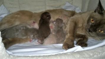 Alle sechs Babys sind da.