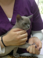 Klein Pallando, 3 Monate alt