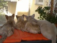 Katzenkinder beobachten Tauben