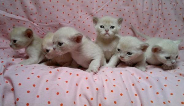 Emma Peel mit ihren Geschwistern