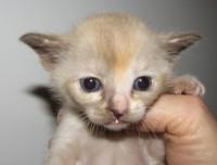 Gloria, 3.5 Wochen alt
