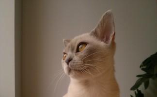 Kalivèrna, 4 Monate alt