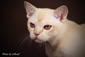 Quan Yin's zauberhafter Blick